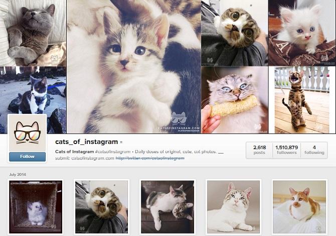 cara-mendapatkan-follower-di-instagram-yang-real